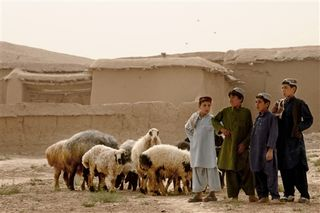 Afghan kids and sheep